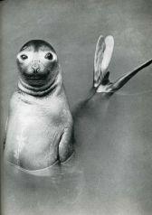humour-drole-photo-life-magazine-03
