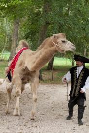 105w chameau court