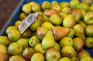 11- pears