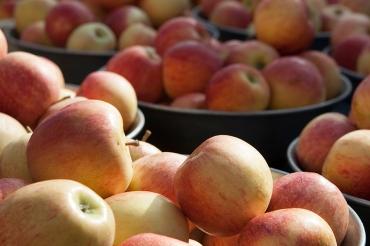 12 - apples