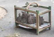 4 - rabbits