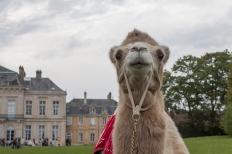 52w chameau blond chateau