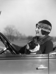 h-armstrong-roberts-woman-at-steering-wheel-driving-car-with-boston-terrier-passenger