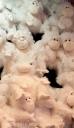 white monkeys