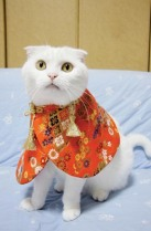 Puss in Boots - Japan