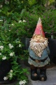 the old man gnome