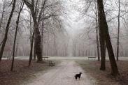 Iggy winter 2013/14